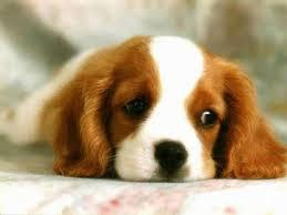 when sorry isn't enough. sad dog face.